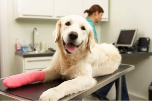 Factors That Affect the Premium of Your Pet Insurance