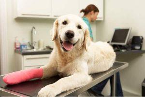Factors That Affect the Premium of Your Pet Insurance